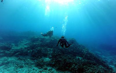divers turtleheaven2 041017mon