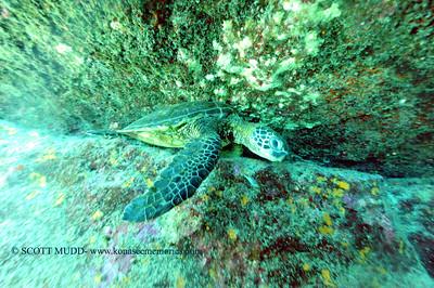 greenseaturtle turtleheaven2 041017mon