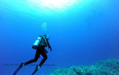 divers dolphins turtleheaven 041017mon