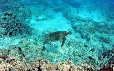greenseaturtle turtleheaven 041017mon