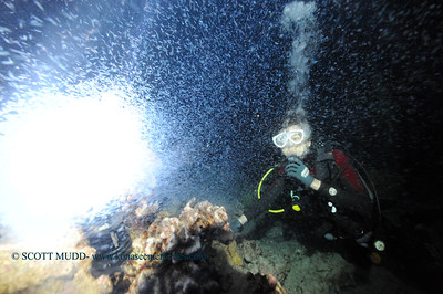 plankton diver keauhou 040317mon