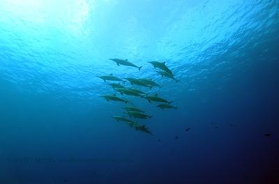 spinnerdolphins turtleheaven2 041017mon