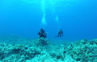 divers turtleheaven 041017mon