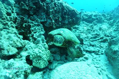 greenseaturtle turtleheaven7 050417thurs