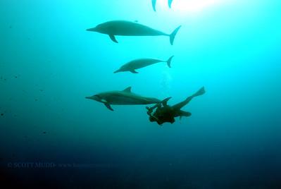 diver dolphins naiabay5 050217tues