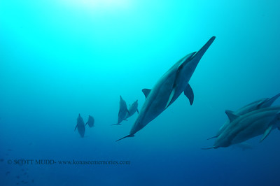 spinnerdolphins naiabay3 050217tues