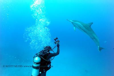 diver dolphins naiabay13 050217tues