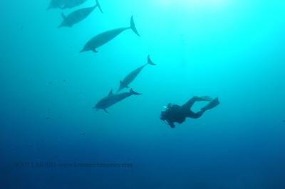 diver dolphins naiabay2 050217tues