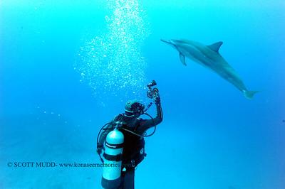 diver dolphins naiabay12 050217tues