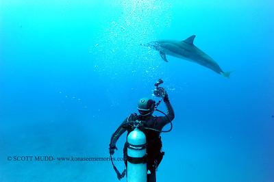 diver dolphins naiabay11 050217tues