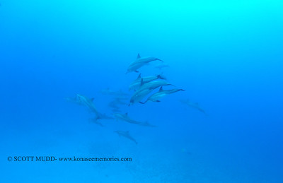 spinnerdolphins naiabay 050117mon