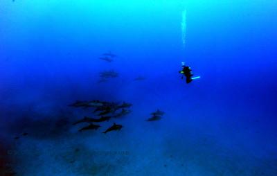 diver dolphins naiabay2 050117mon