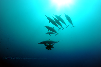 diver dolphins naiabay7 050217tues