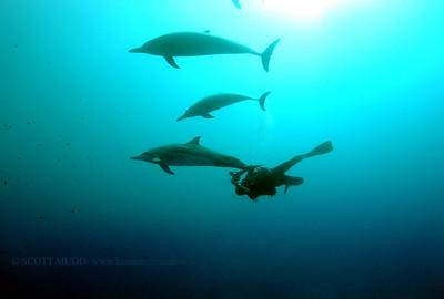 diver dolphins naiabay4 050217tues