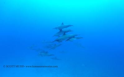 spinnerdolphins naiabay2 050117mon