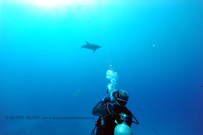 diver dolphins naiabay10 050217tues