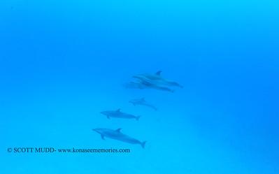 spotteddolphins naiabay2 050117mon