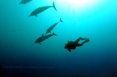 diver dolphins naiabay3 050217tues