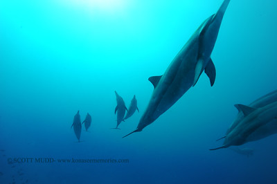 spinnerdolphins naiabay 050217tues