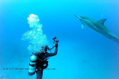 diver dolphins naiabay14 050217tues