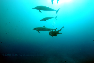 diver dolphins naiabay6 050217tues