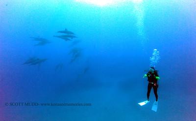 diver dolphins naiabay3 050117mon