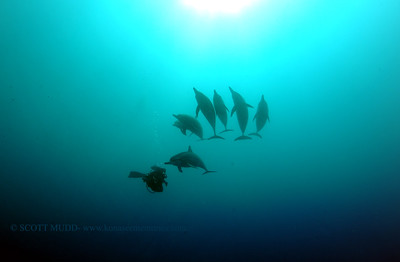 diver dolphins naiabay8 050217tues