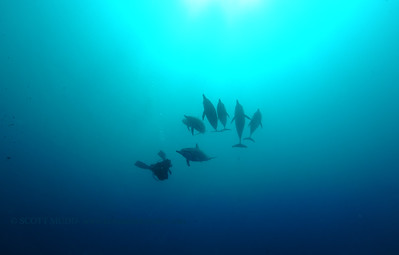 diver dolphins naiabay9 050217tues