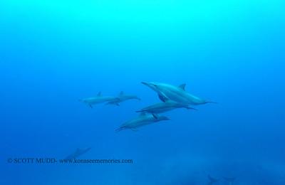 spinnerdolphins naiabay4 050117mon