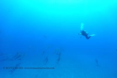 diver dolphins naiabay 050117mon