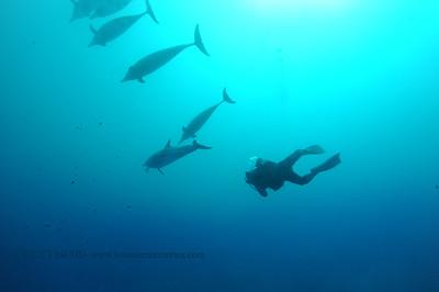 diver dolphins naiabay 050217tues