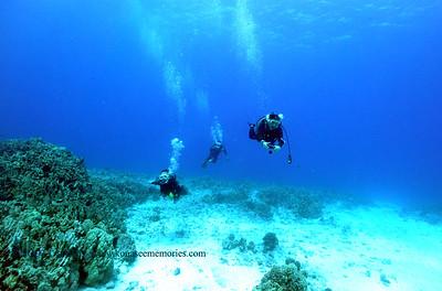divers turtleheaven 060817thurs