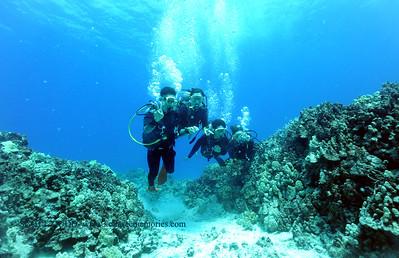 divers turtleheaven10 060217fri