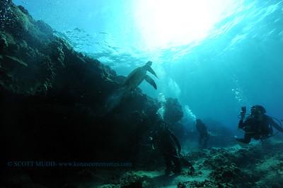 divers turtle turtleheaven7 061617fri
