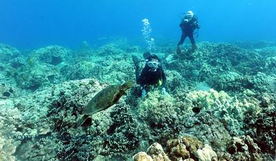 divers turtle turtleheaven2 060817thurs