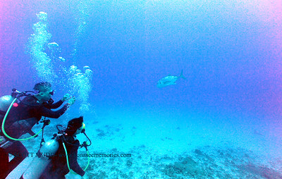 divers gianttrevally naiabay 070617thurs