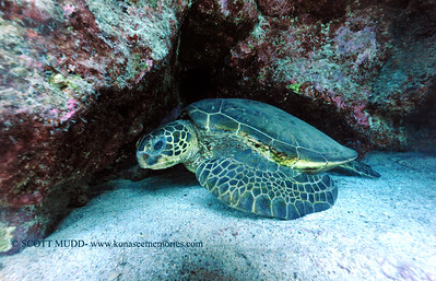greenseaturtle turtleheaven2 070217sun