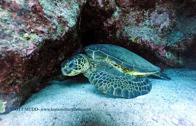 greenseaturtle turtleheaven2 070217sun