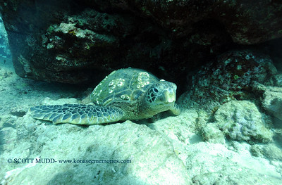 greenseaturtle turtleheaven 070417tues