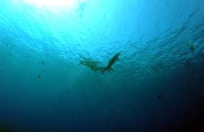 spinnerdolphins turtleheaven 070417tues