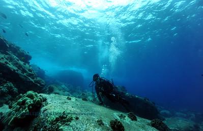 divers aquarium 070617thurs