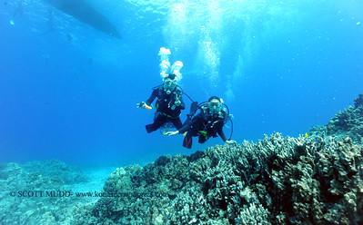 divers turtleheaven3 070417tues