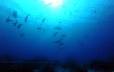 spinnerdolphins turtleheaven2 070417tues