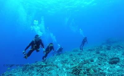 divers aquarium2 070617thurs