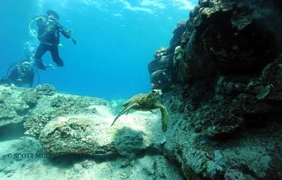 divers turtle turtleheaven 070417tues