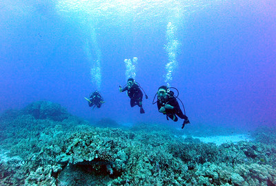 divers turtleheaven2 070417tues
