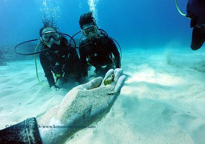 divers razorwrasse kailuabay2 080117mon