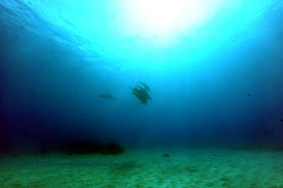 spinnerdolphins kailuabay3 091217tues