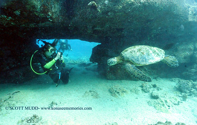 divers turtleheaven6 092017wed