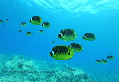 raccoonbutterflyfish naiabay4 091817mon